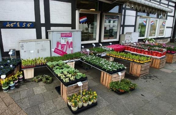 Besondere Geschenkideen aus Celle: Blumen- und Pflanzengeschenke