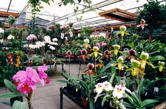 Besondere Geschenkideen aus Celle: Geschenkideen rund um die Orchidee