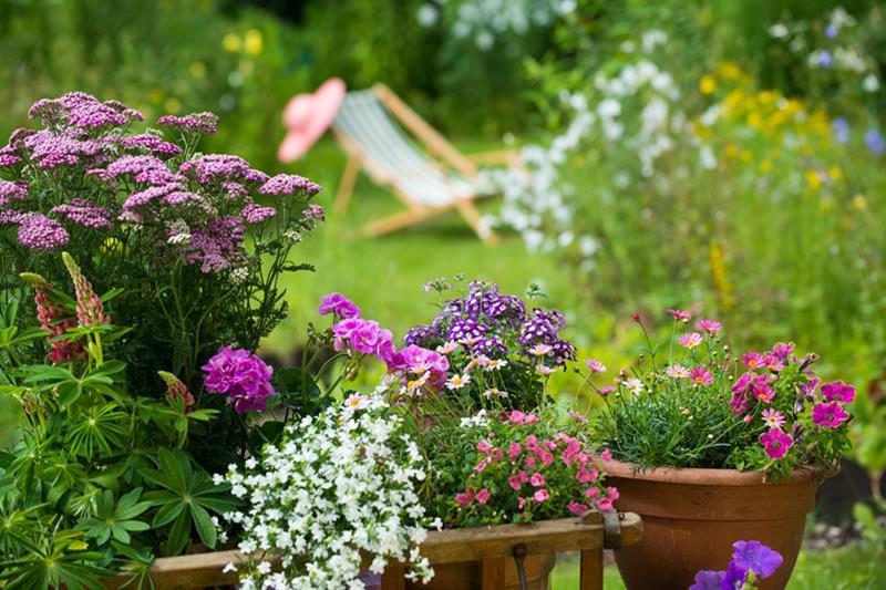 Hervorragendes Geschenk aus Jena: Schöne Gartenpflanzen
