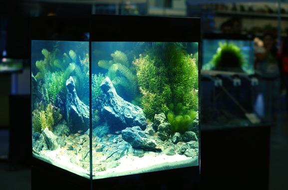 Besondere Geschenkideen aus Uelzen: Hochwertiges Aquarium