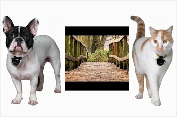 Besondere Geschenkideen aus Moosburg: Eyenimal Tierkamera