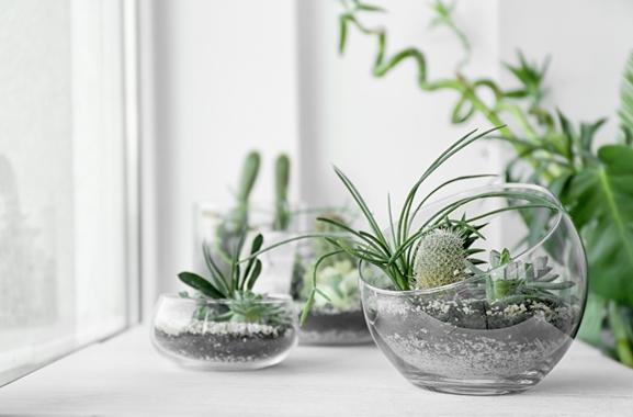 Besondere Geschenkideen aus Soltau: Bepflanztes Glasgefäß