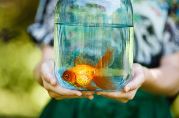 Besondere Geschenkideen aus Uelzen: Goldfische für den Gartenteich