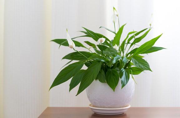Besondere Geschenkideen aus Soltau: Grünpflanze