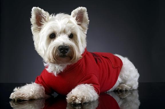 Besondere Geschenkideen aus Augsburg: Hunde-Fotoshooting