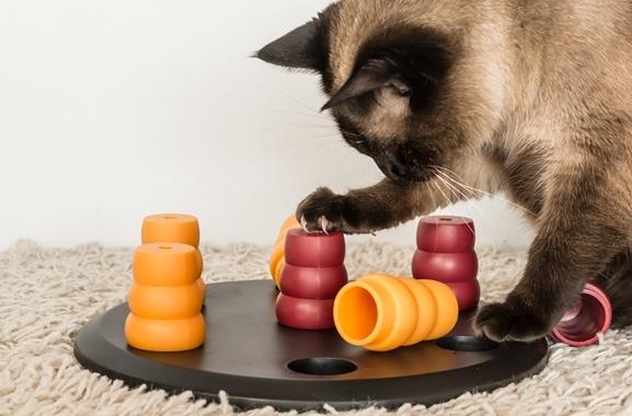 Besondere Geschenkideen aus Uelzen: Intelligenzspielzeug für Katzen