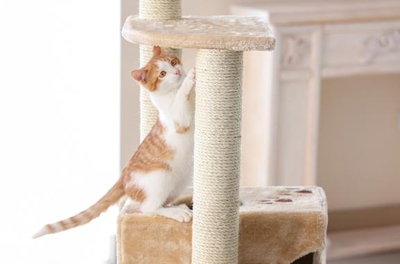 Besondere Geschenkideen aus Uelzen: Katzenkratzbaum