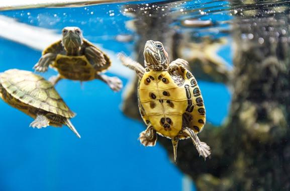 Besondere Geschenkideen aus Salzwedel: Wasserschildkröten