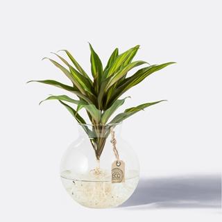 Besondere Geschenkideen aus Elmshorn: Wasserpflanze