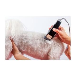 Besondere Geschenkideen aus der Region: Schermaschine für Hunde