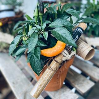 Besondere Geschenkideen aus Soltau: Gewürz-Pflanzen-Arrangement