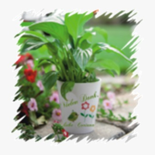 Besondere Geschenkideen aus Uelzen: Bedruckter Blumentopf