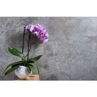 Besondere Geschenkideen aus Soltau: Orchidee