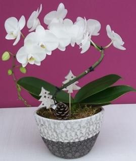 Besondere Geschenkideen aus Celle: Orchideen-Pflanzschale