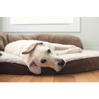 Besondere Geschenkideen aus Uelzen: Gemütliches Hundebett