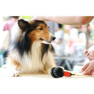 Besondere Geschenkideen aus Uelzen: Hochwertige Hundebürste