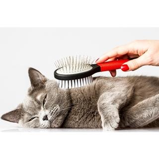 Besondere Geschenkideen aus Uelzen: Hochwertige Katzenbürste