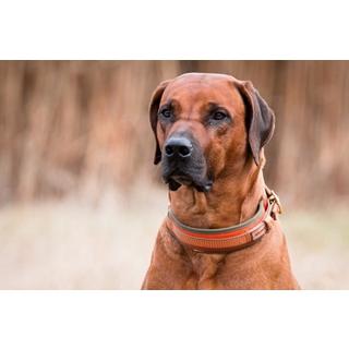 Besondere Geschenkideen aus Uelzen: Hochwertiges Hundehalsband
