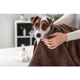 Besondere Geschenkideen aus Uelzen: Hochwertiges Hundeshampoo