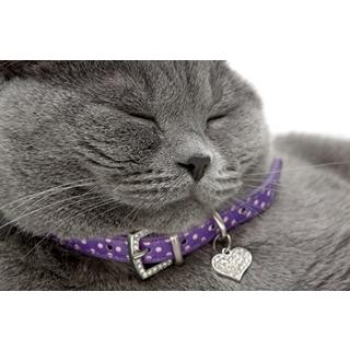 Besondere Geschenkideen aus Uelzen: Hochwertiges Katzenhalsband