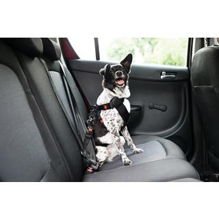 Besondere Geschenkideen aus Uelzen: Hunde-Anschnallgurt für's Auto