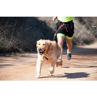 Besondere Geschenkideen aus Uelzen: Hunde-Joggingleine
