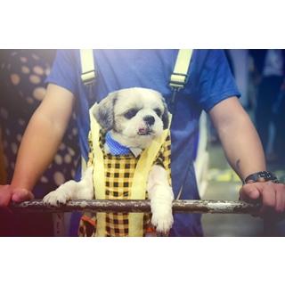 Besondere Geschenkideen aus Uelzen: Hunde-Umschnalltrage