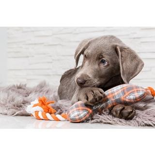 Besondere Geschenkideen aus Bremen: Hundespielzeug