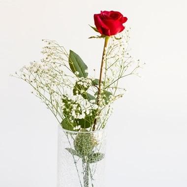 Besondere Geschenkideen aus Soltau: Langstielige Rose als kleine Aufmerksamkeit