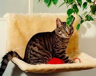 Besondere Geschenkideen in Ihrer Nähe: Katzen-Heizkörperliege