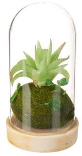 Besondere Geschenkideen in Ihrer Nähe: Kunstpflanze - Sukkulente mit Glasglocke
