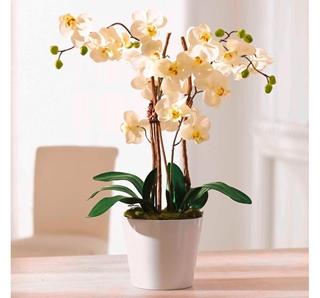 Besondere Geschenkideen in Ihrer Nähe: Kunstpflanze Orchidee