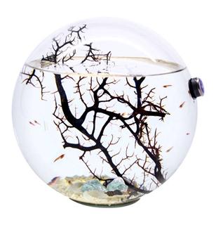 Geschenkideen aus der Region: Meeres-Ökosystem aus Glas