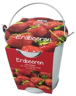 Besondere Geschenkideen in Ihrer Nähe: Erdbeeren-Pflanzset im Zinkeimer