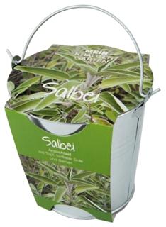 Besondere Geschenkideen in Ihrer Nähe: Salbei-Pflanzset im Zinkeimer