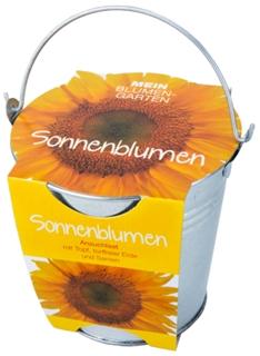 Besondere Geschenkideen in Ihrer Nähe: Sonnenblumen-Pflanzset im Zinkeimer