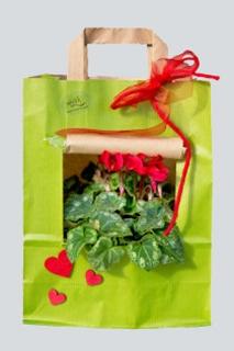 Besondere Geschenkideen in Uelzen: Pflanze in der Tüte