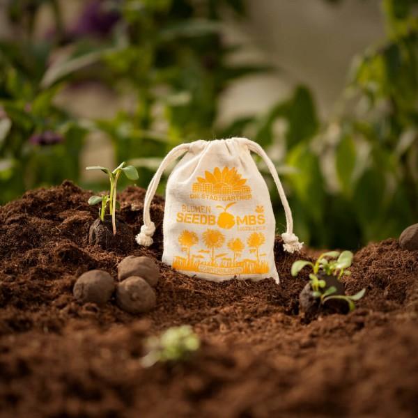 Besondere Geschenkideen aus Hannover: Samenbomben Sonnenblumen