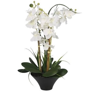 Besondere Geschenkideen in Ihrer Nähe: Kunstpflanze Orchidee im Topf