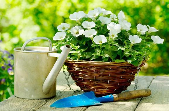 Besondere Geschenkideen aus Düren: Gartenblumen