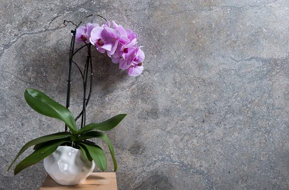 Besondere Geschenkideen aus Meinerzhagen: Orchidee